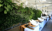 Vertical garden in a beauty salon
